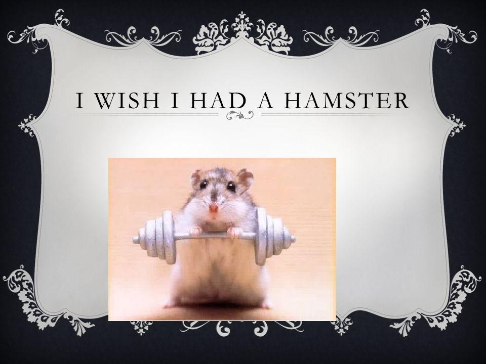 I WISH I HAD A HAMSTER