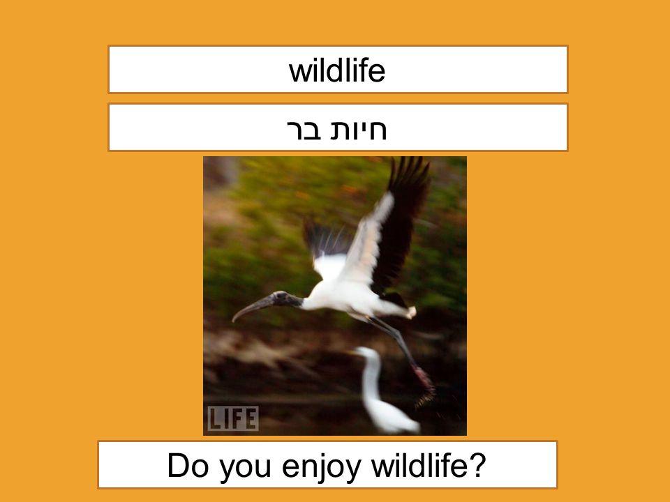 wildlife חיות בר Do you enjoy wildlife