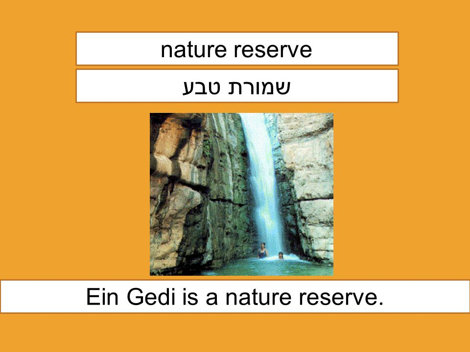 nature reserve שמורת טבע Ein Gedi is a nature reserve.