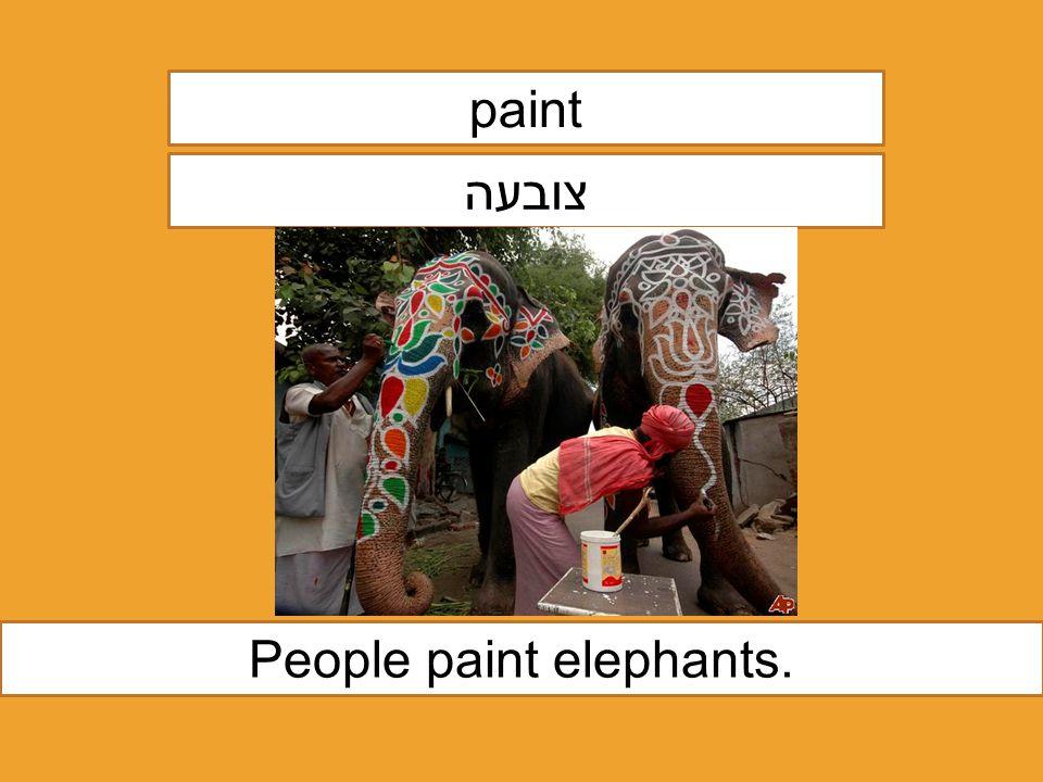 paint צובעה People paint elephants.
