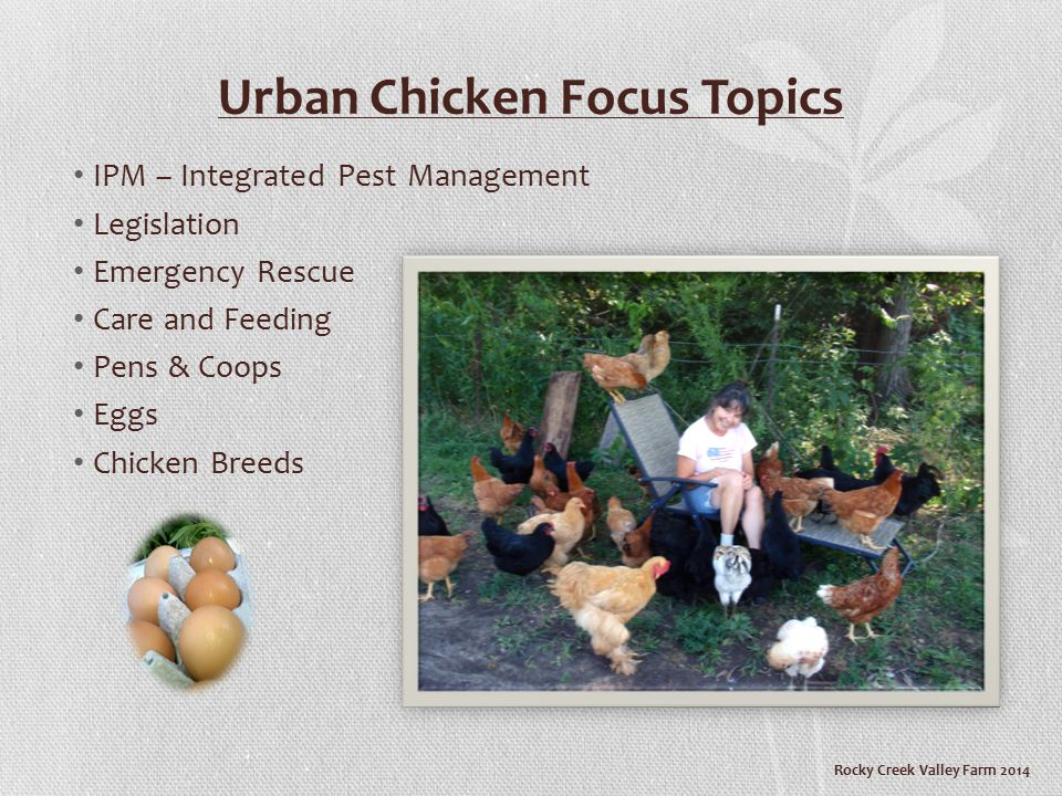 Rocky Creek Valley Farm 2014 QUICK SURVEY Does your city currently allow chickens.