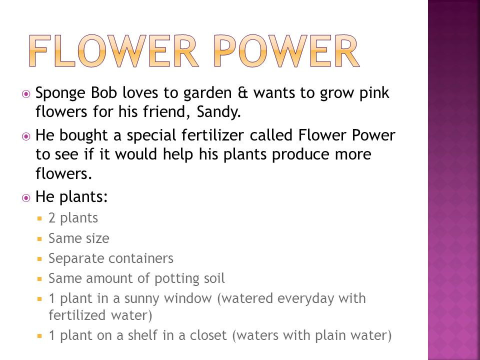  Sponge Bob loves to garden & wants to grow pink flowers for his friend, Sandy.