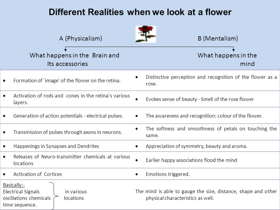 Different Realities when we look at a flower  Formation of `image' of the flower on the retina.  Distinctive perception and recognition of the flowe