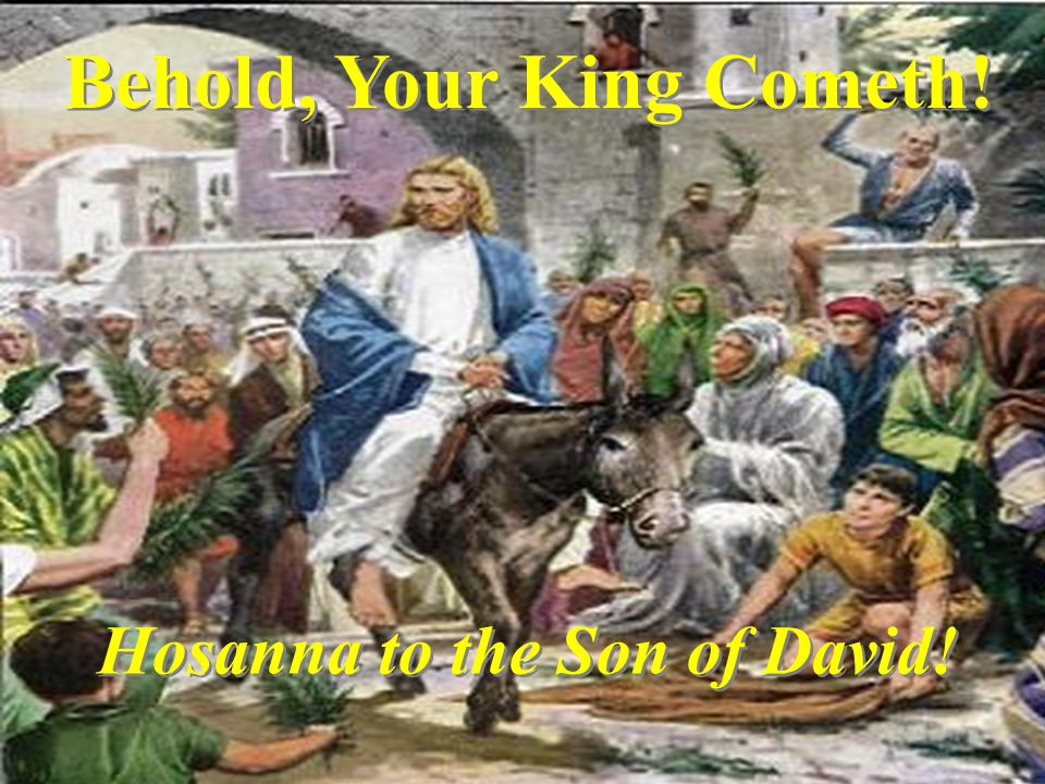 Behold, Your King Cometh! Hosanna to the Son of David!
