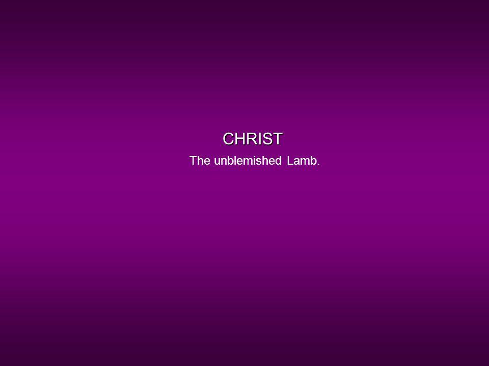 CHRIST The unblemished Lamb.