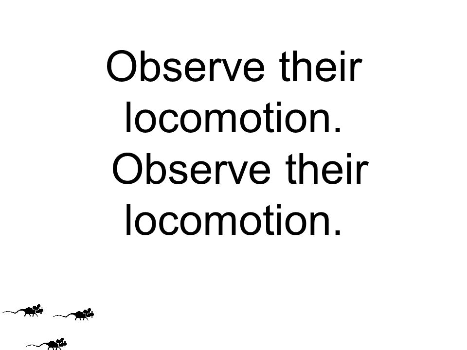 Observe their locomotion.