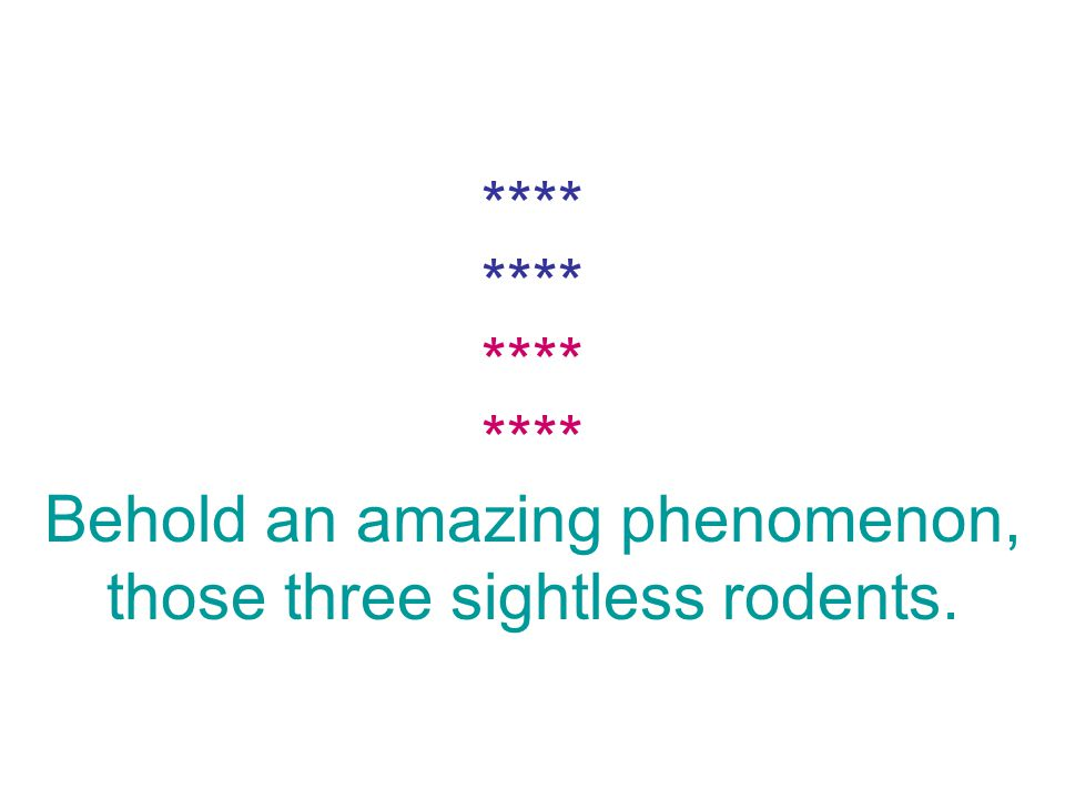 **** **** **** **** Behold an amazing phenomenon, those three sightless rodents.