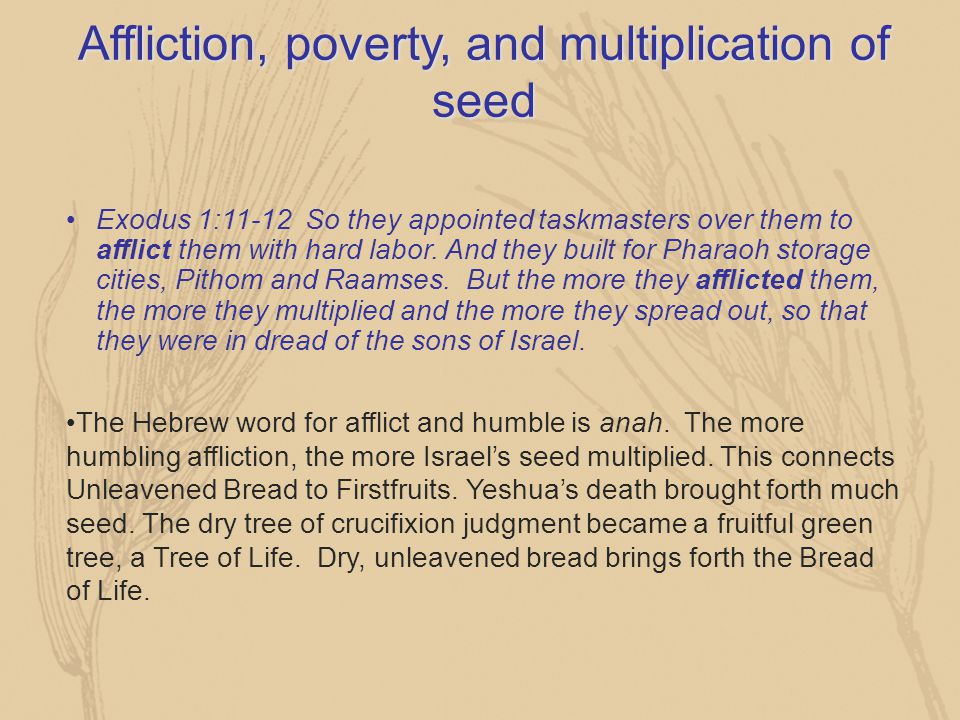 Affliction, poverty, and multiplication of seed Exodus 1:11-12 So they appointed taskmasters over them to afflict them with hard labor. And they built