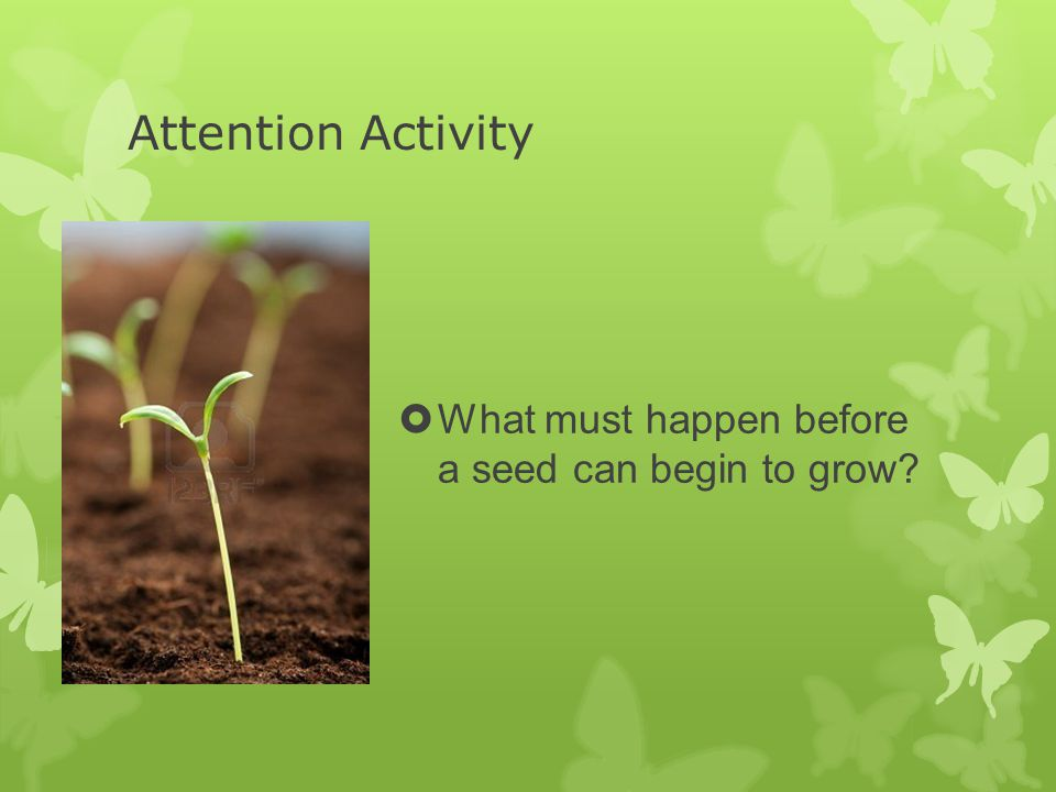 Attention Activity  What must happen before a seed can begin to grow?