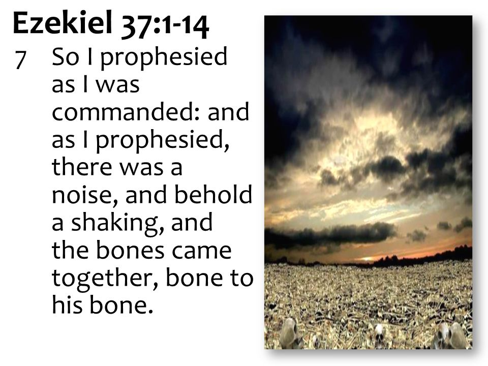 Ezekiel 37:1-14 7So I prophesied as I was commanded: and as I prophesied, there was a noise, and behold a shaking, and the bones came together, bone to his bone.