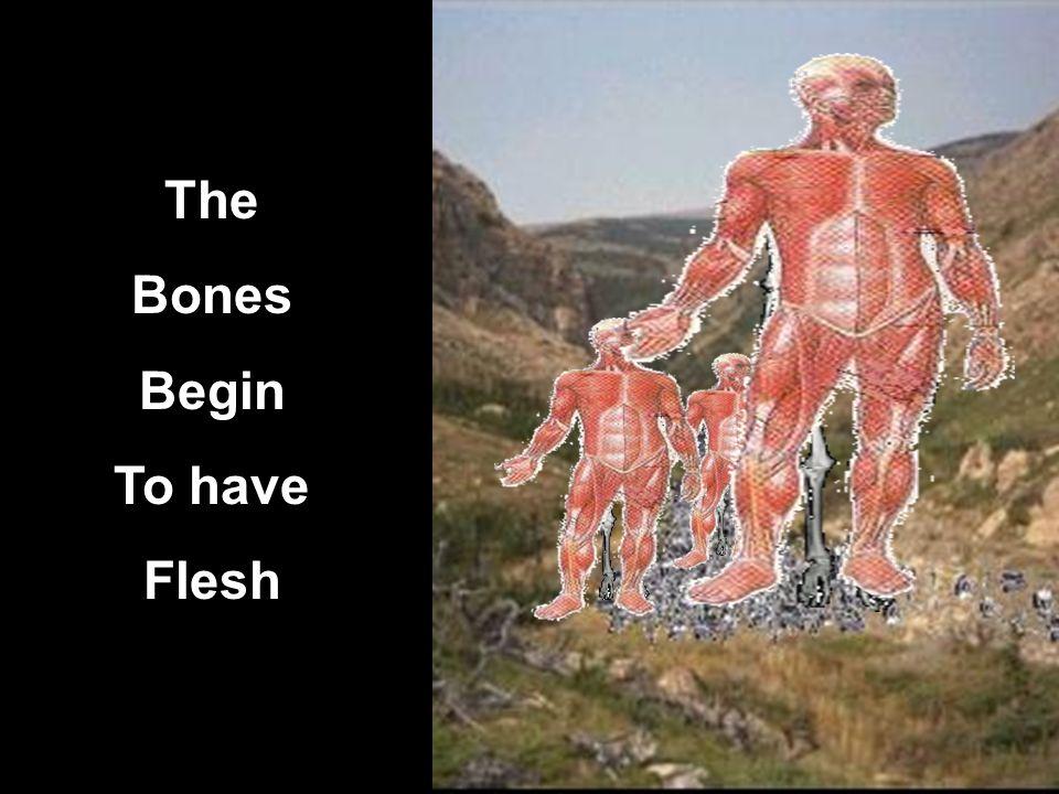 The Bones Begin To have Flesh