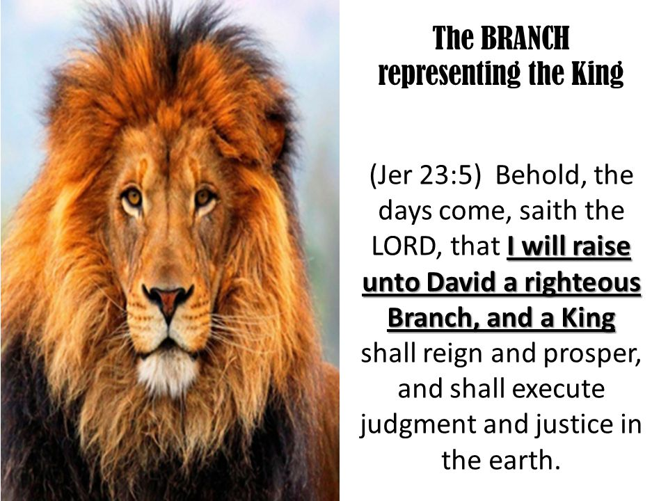 The BRANCH representing the King I will raise unto David a righteous Branch, and a King (Jer 23:5) Behold, the days come, saith the LORD, that I will raise unto David a righteous Branch, and a King shall reign and prosper, and shall execute judgment and justice in the earth.