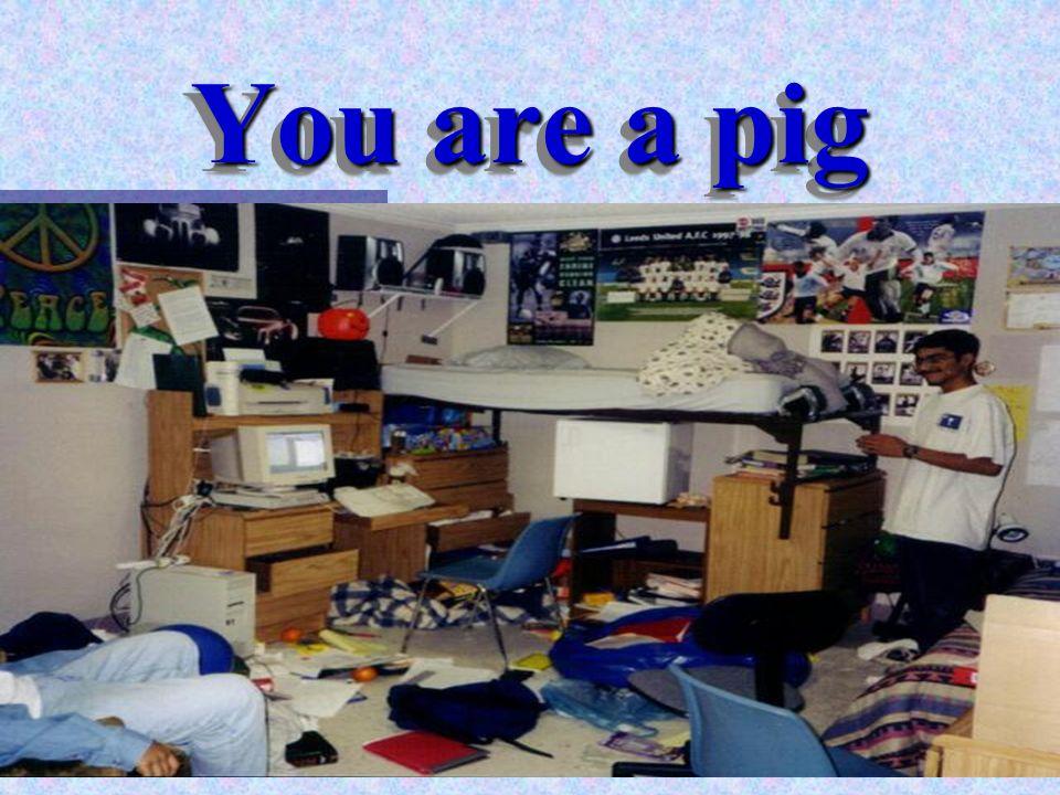 Professor Pen You are a pig
