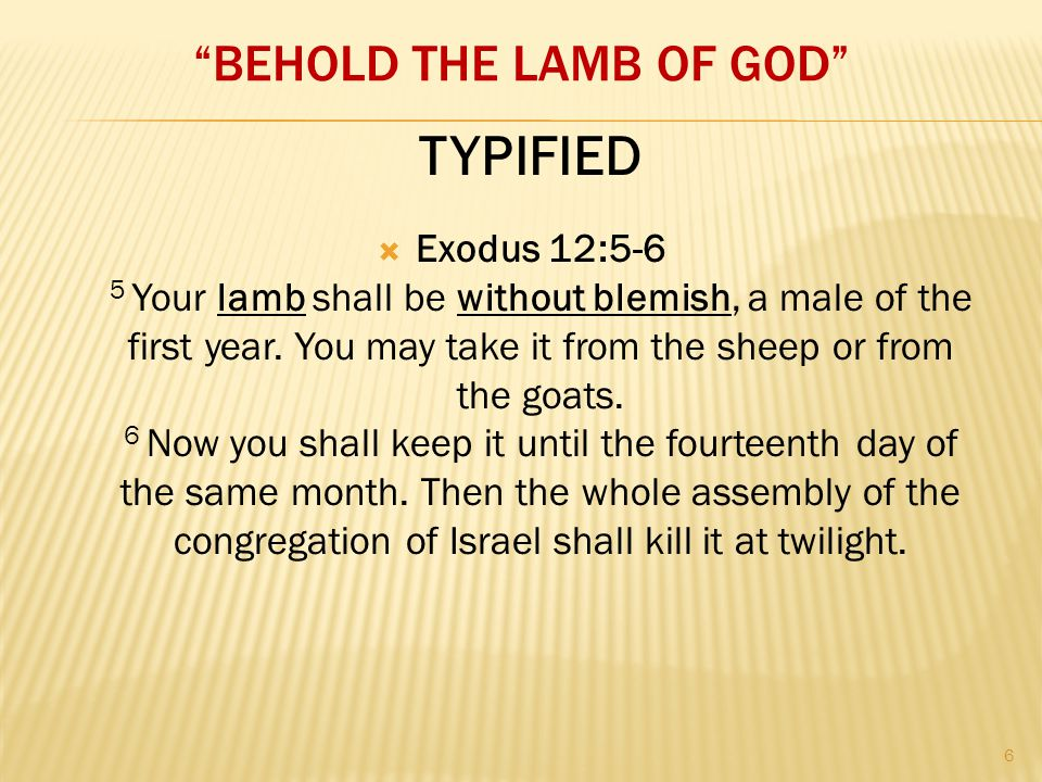 """BEHOLD THE LAMB OF GOD""  Exodus 12:5-6 5 Your lamb shall be without blemish, a male of the first year. You may take it from the sheep or from the go"