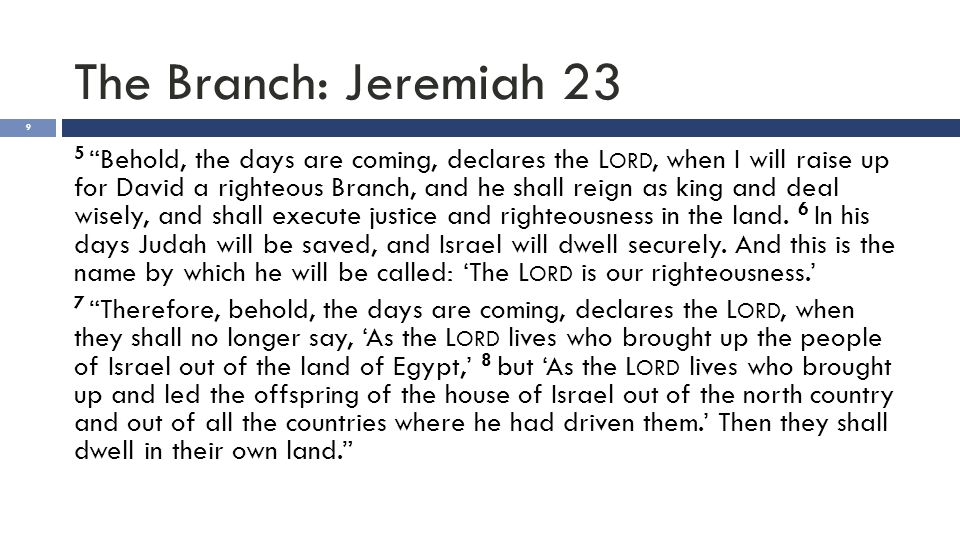 "The Branch: Jeremiah 23 9 5 ""Behold, the days are coming, declares the L ORD, when I will raise up for David a righteous Branch, and he shall reign as"