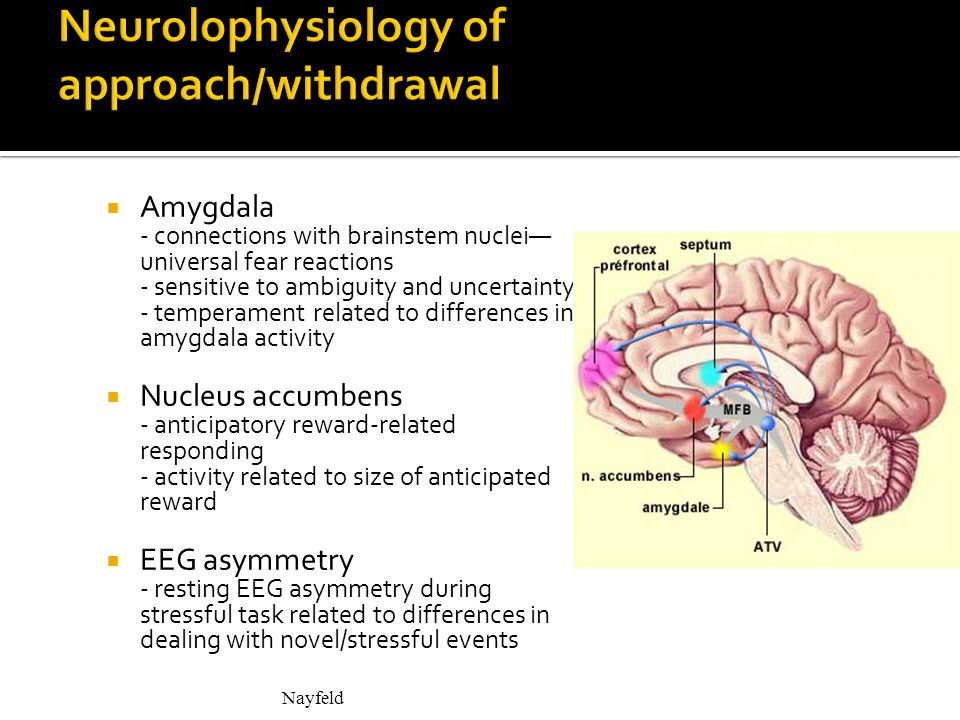 Amygdala - connections with brainstem nuclei— universal fear reactions - sensitive to ambiguity and uncertainty - temperament related to differences in amygdala activity  Nucleus accumbens - anticipatory reward-related responding - activity related to size of anticipated reward  EEG asymmetry - resting EEG asymmetry during stressful task related to differences in dealing with novel/stressful events Nayfeld - right frontal EEG asymmetry discriminated among preschoolers' levels of social play