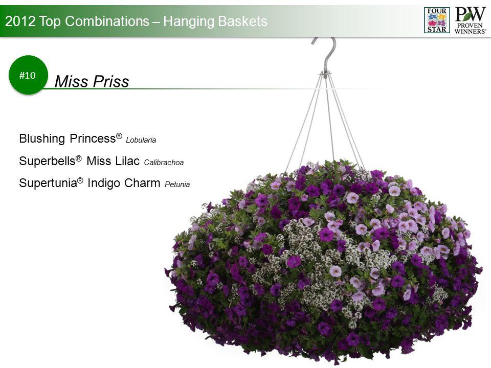 2012 Top Combinations – Hanging Baskets #10 Miss Priss Blushing Princess ® Lobularia Superbells ® Miss Lilac Calibrachoa Supertunia ® Indigo Charm Petunia