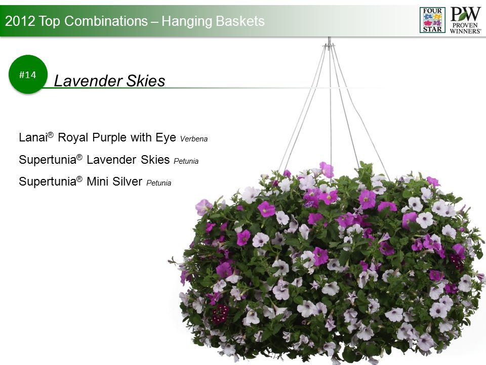 2012 Top Combinations – Hanging Baskets #14 Lavender Skies Lanai ® Royal Purple with Eye Verbena Supertunia ® Lavender Skies Petunia Supertunia ® Mini Silver Petunia