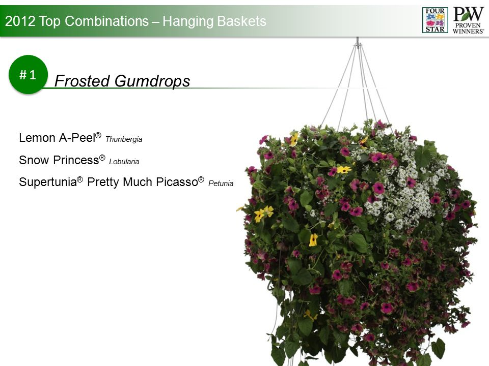 2012 Top Combinations – Hanging Baskets #1 Frosted Gumdrops Lemon A-Peel ® Thunbergia Snow Princess ® Lobularia Supertunia ® Pretty Much Picasso ® Petunia