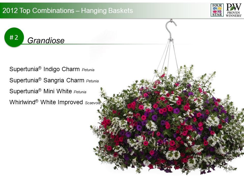 2012 Top Combinations – Hanging Baskets #2 Grandiose Supertunia ® Indigo Charm Petunia Supertunia ® Sangria Charm Petunia Supertunia ® Mini White Petunia Whirlwind ® White Improved Scaevola