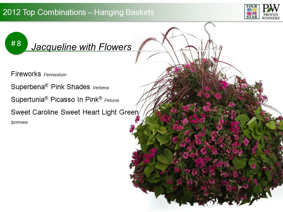 2012 Top Combinations – Hanging Baskets #9 Sangria Sky Laguna ™ Sky Blue Lobelia Supertunia ® Sangria Charm Petunia