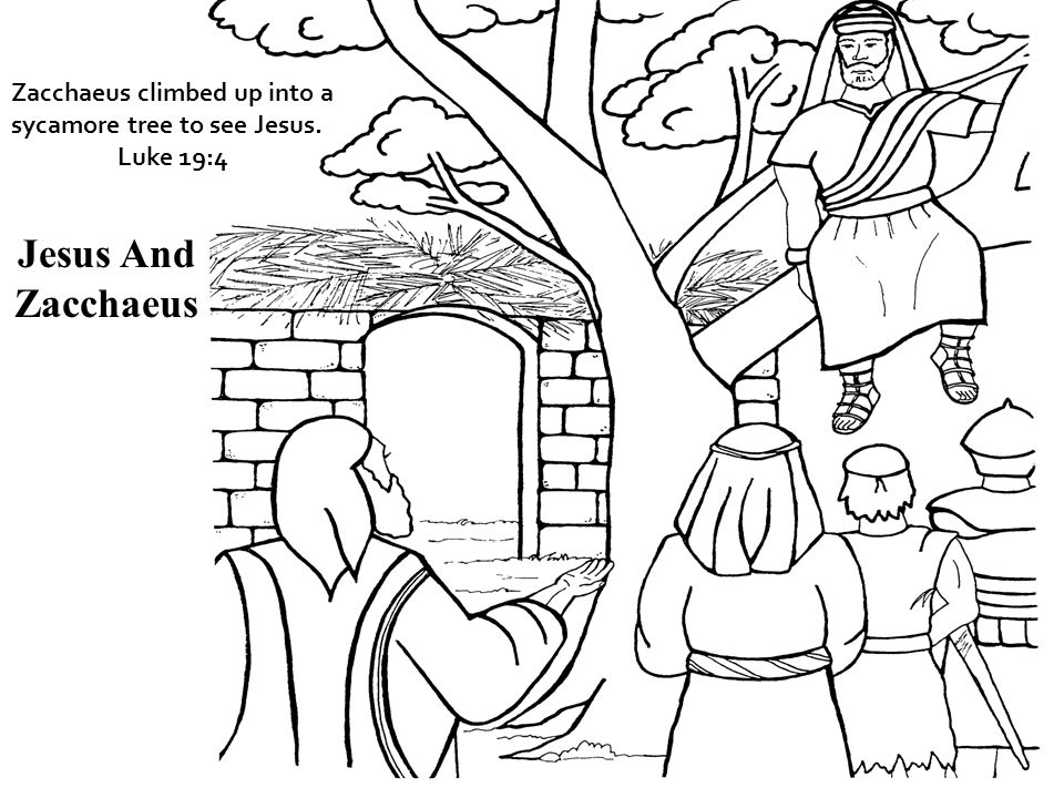 Zacchaeus climbed up into a sycamore tree to see Jesus. Luke 19:4 Jesus And Zacchaeus