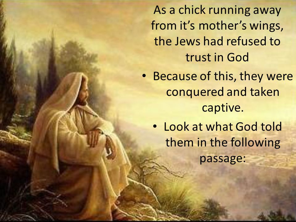 As a chick running away from it's mother's wings, the Jews had refused to trust in God Because of this, they were conquered and taken captive. Look at