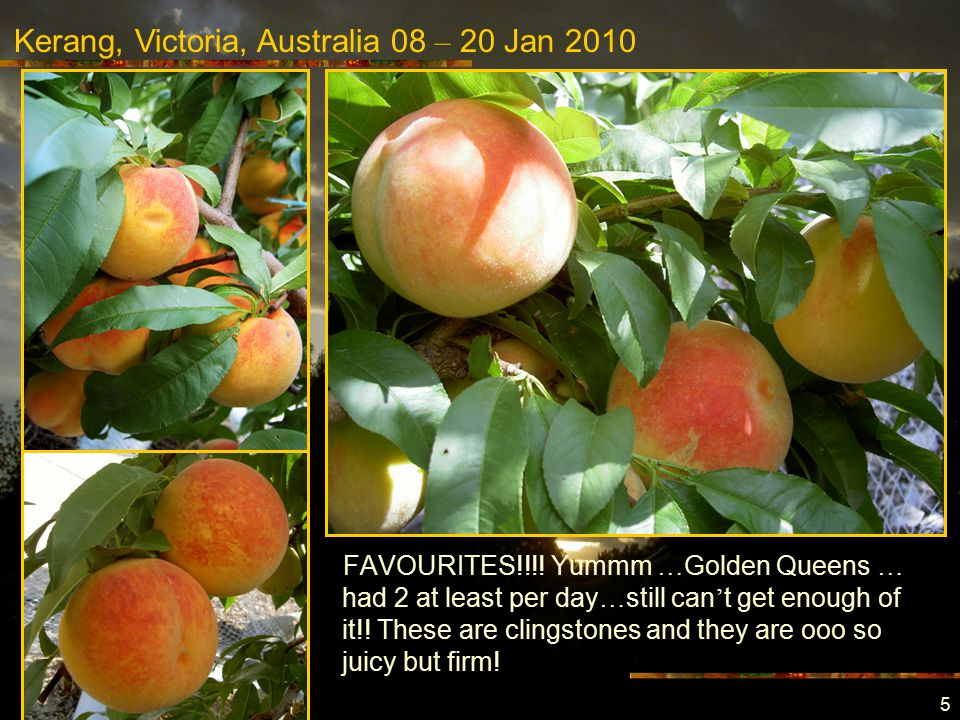 Kerang, Victoria, Australia 08 – 20 Jan 2010 5 FAVOURITES!!!.