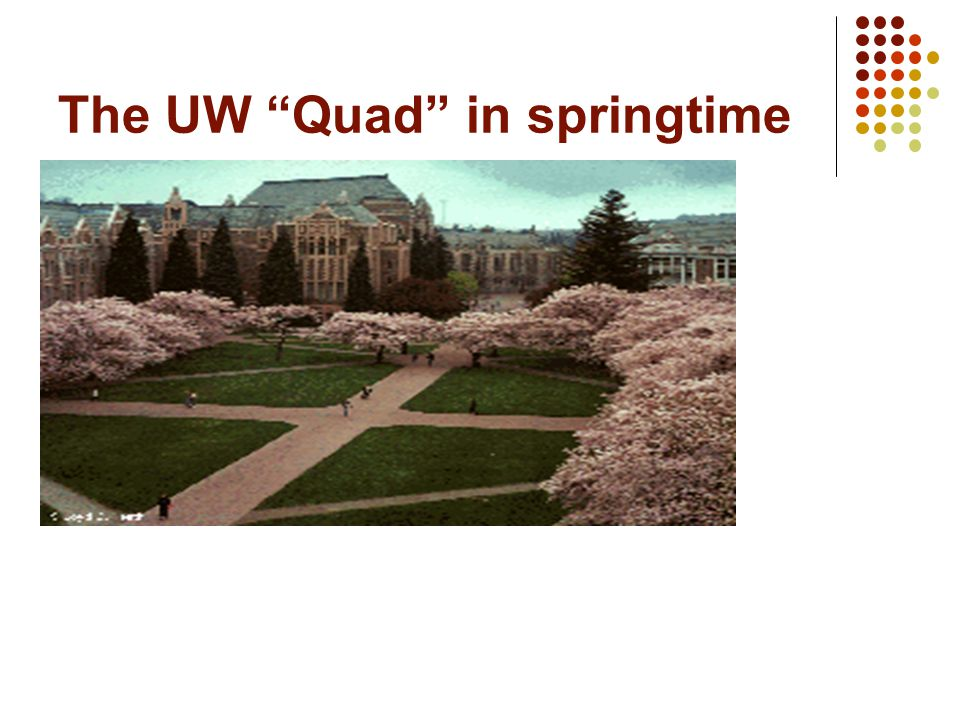 The UW Quad in springtime
