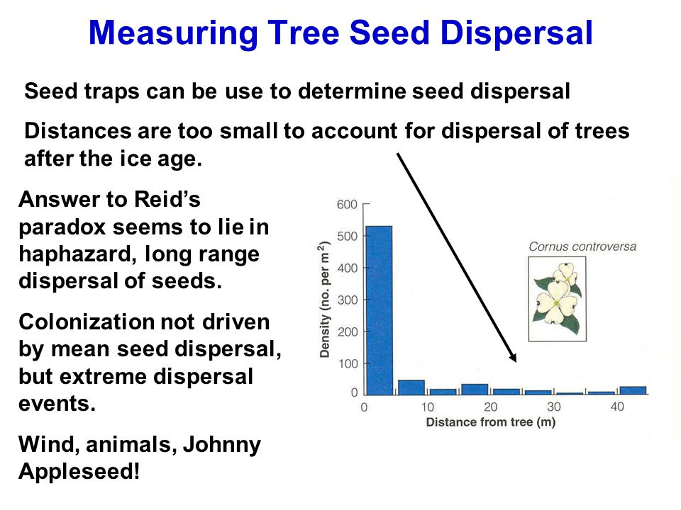 Measuring Tree Seed Dispersal Seed traps can be use to determine seed dispersal Distances are too small to account for dispersal of trees after the ice age.