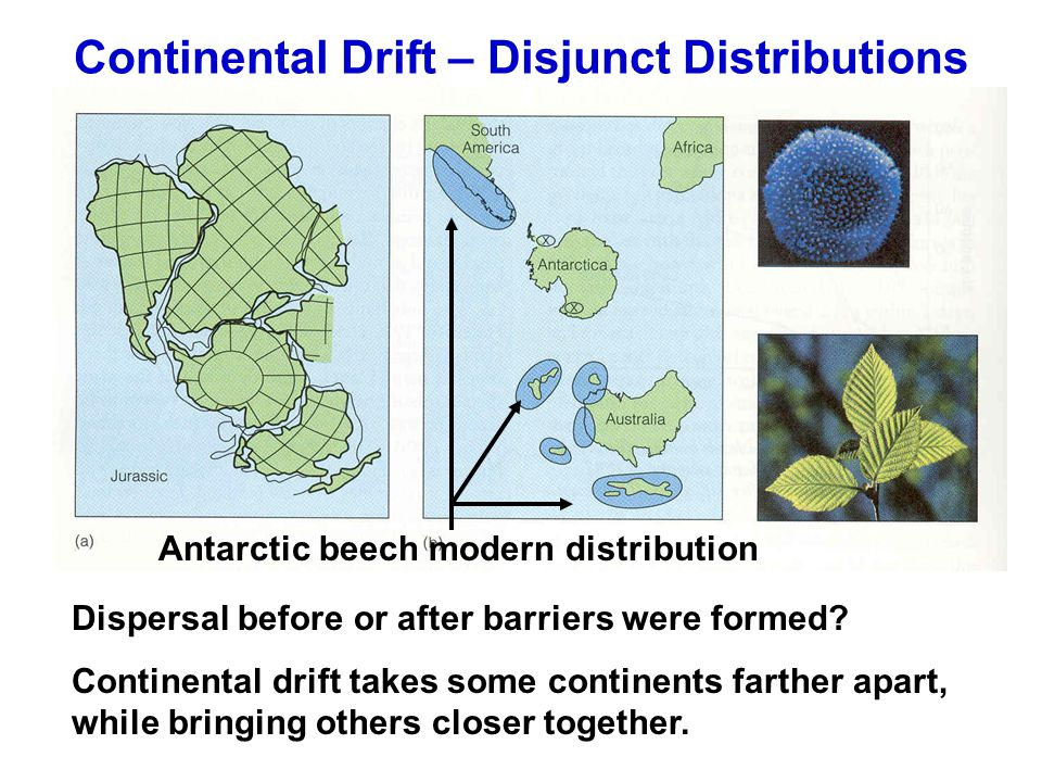 Continental Drift – Disjunct Distributions Dispersal before or after barriers were formed.