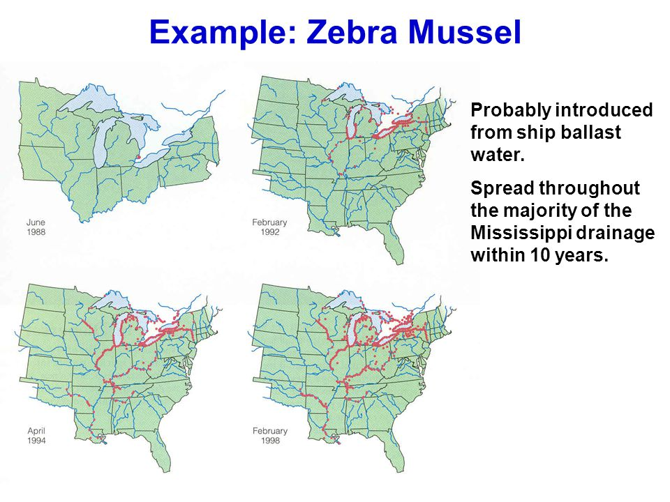 Example: Zebra Mussel Probably introduced from ship ballast water.