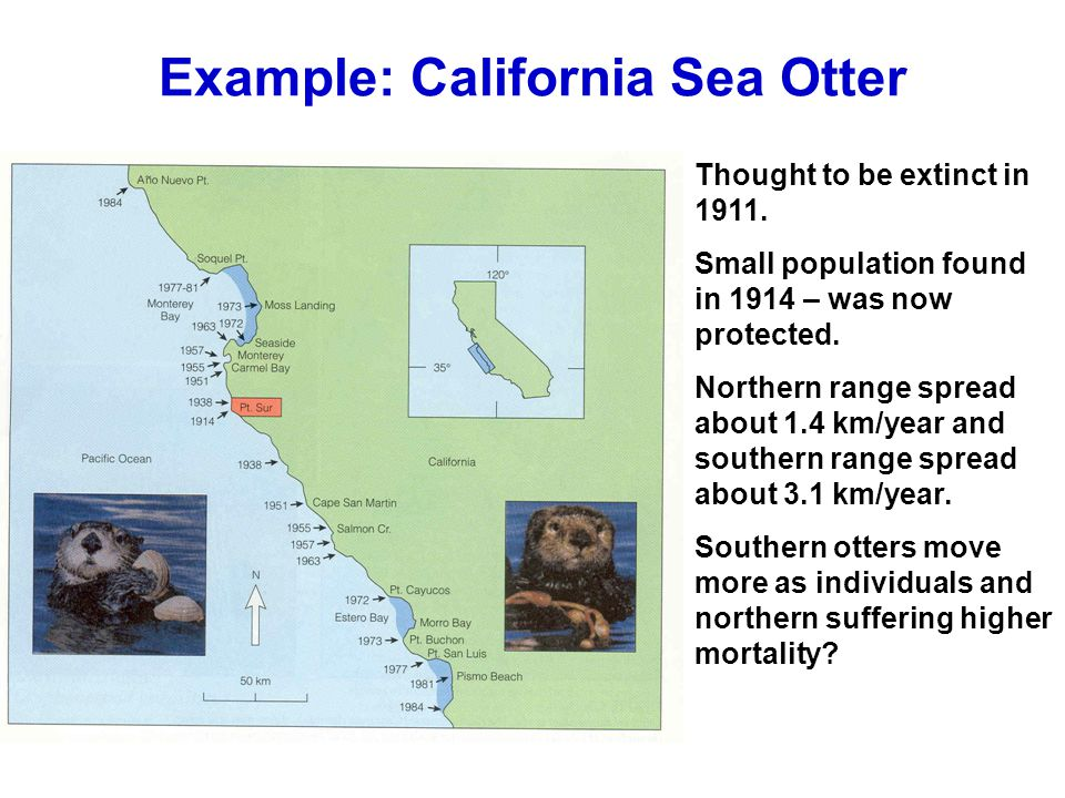 Example: California Sea Otter Thought to be extinct in 1911.