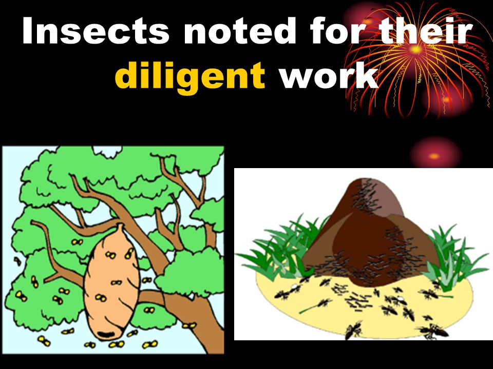 Insects noted for their diligent work