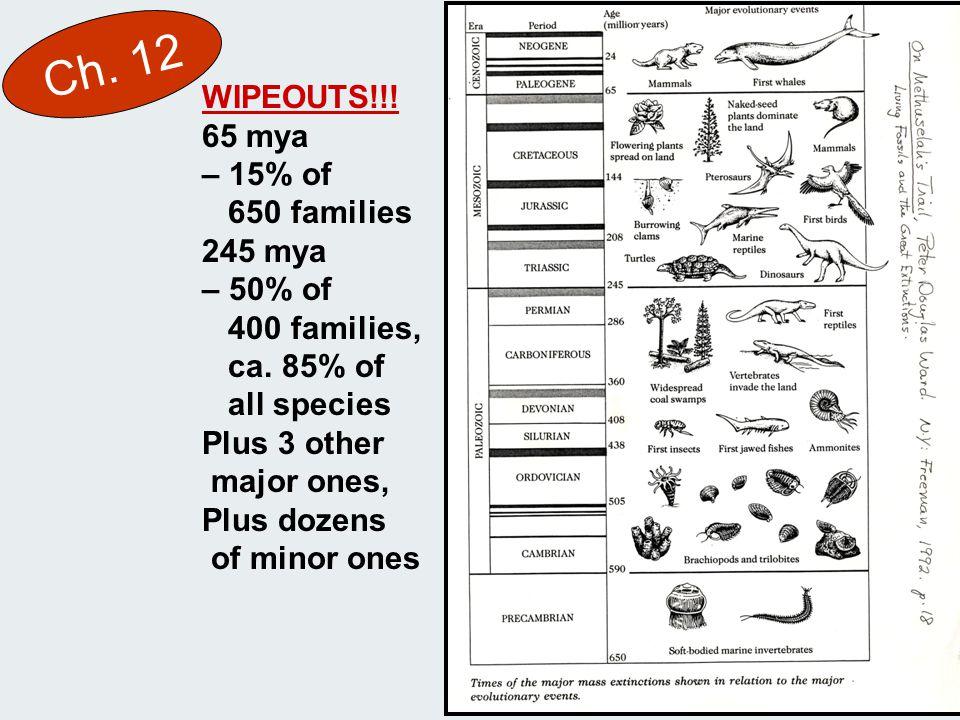 Ch. 12 WIPEOUTS!!. 65 mya – 15% of 650 families 245 mya – 50% of 400 families, ca.