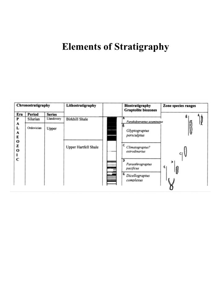 Elements of Stratigraphy