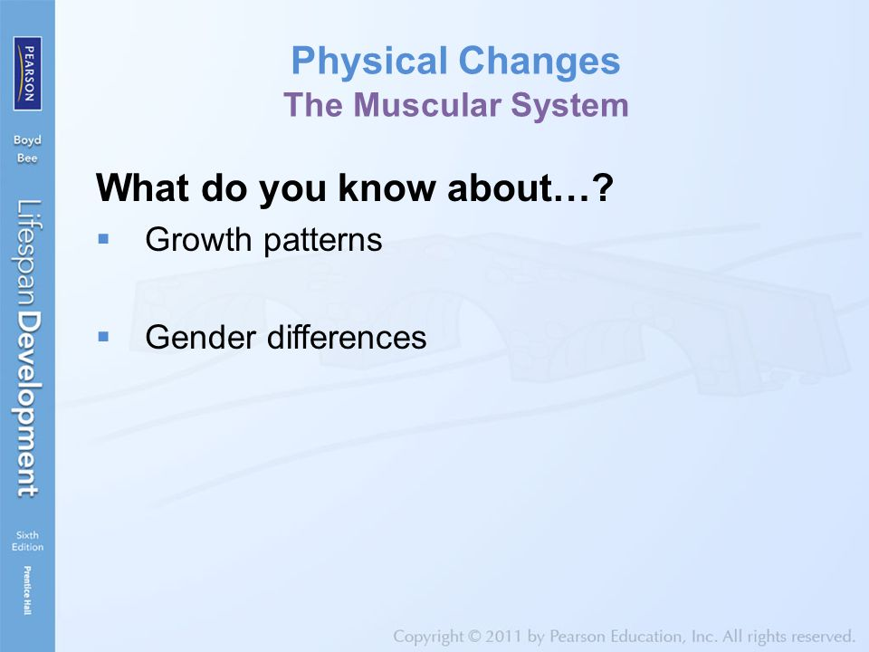Physical Changes The Muscular System What do you know about…?  Growth patterns  Gender differences