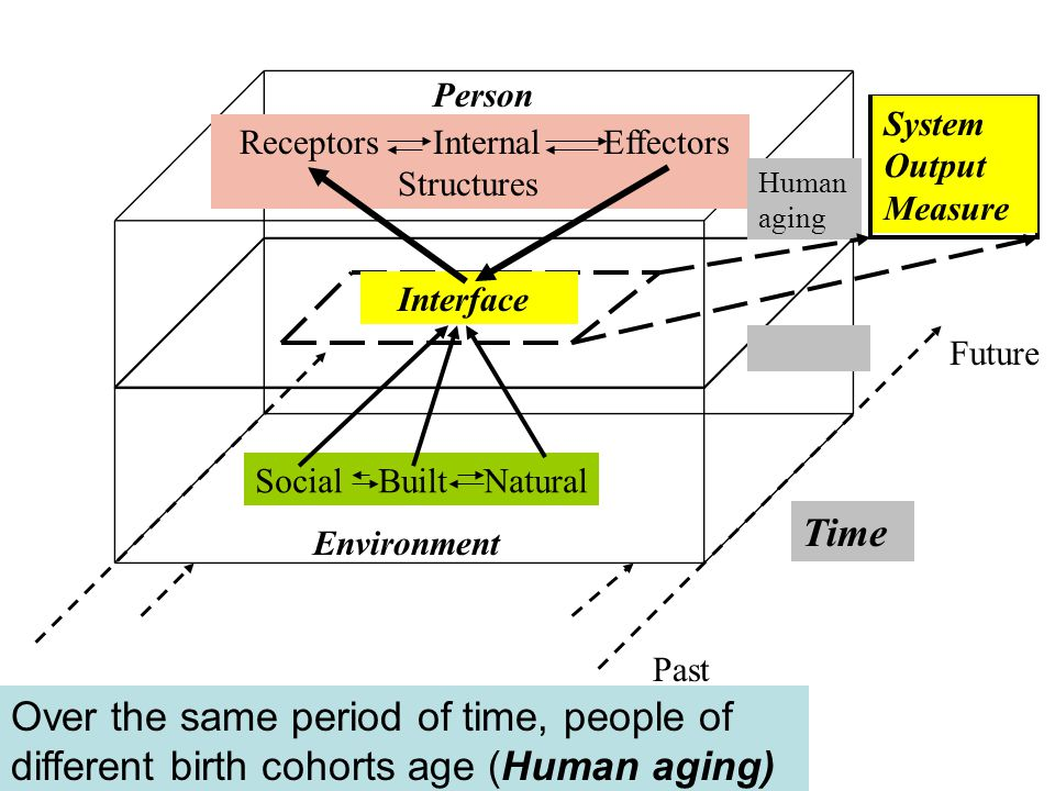 Environment Person Social Built Natural Receptors Internal Effectors Structures Interface Future Past Time Human aging System Output Measure Over the same period of time, people of different birth cohorts age (Human aging)