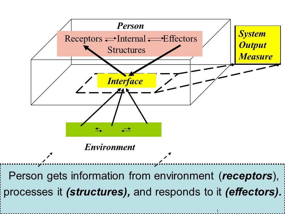 Environment Person Receptors Internal Effectors Structures Interface System Output Measure Person gets information from environment (receptors), processes it (structures), and responds to it (effectors).