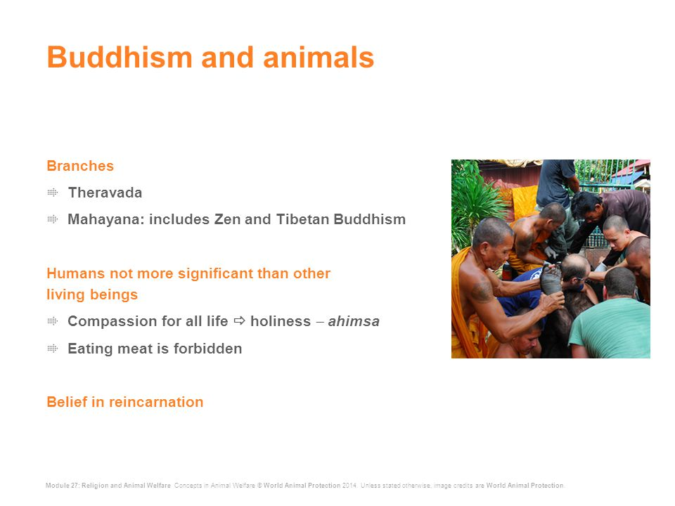 Module 27: Religion and Animal Welfare Concepts in Animal Welfare © World Animal Protection 2014.