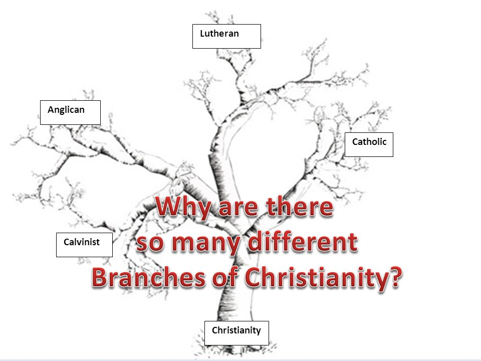 Catholic Lutheran Calvinist Anglican Christianity
