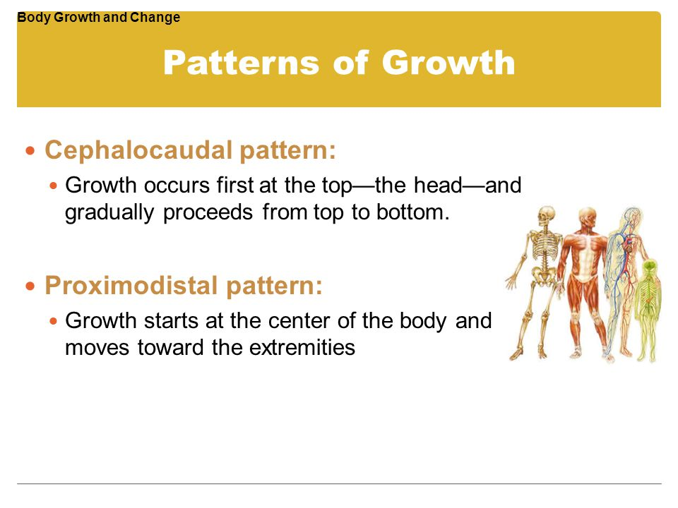 Patterns of Growth Cephalocaudal pattern: Growth occurs first at the top—the head—and gradually proceeds from top to bottom. Proximodistal pattern: Gr