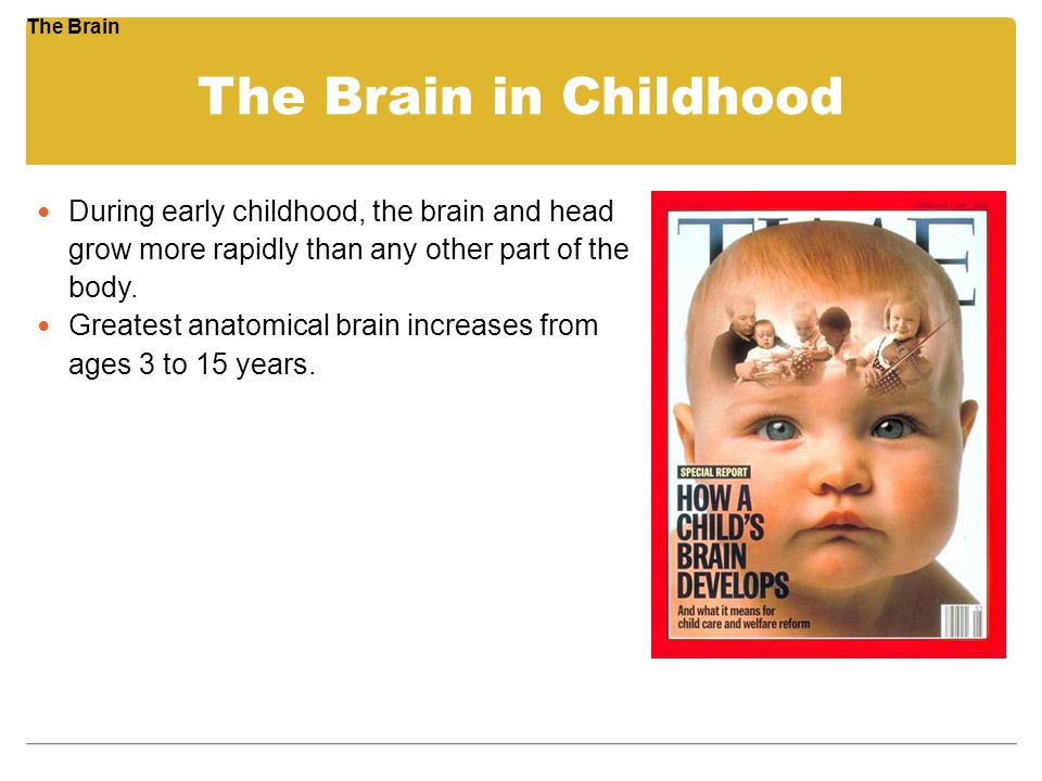 The Brain in Childhood During early childhood, the brain and head grow more rapidly than any other part of the body. Greatest anatomical brain increas
