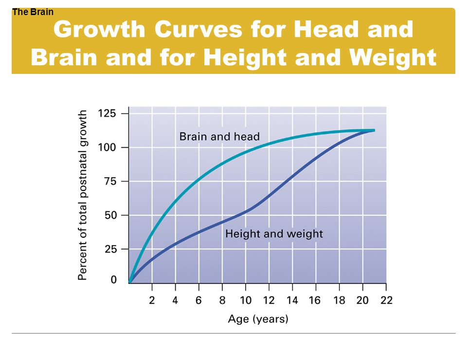 Growth Curves for Head and Brain and for Height and Weight The Brain
