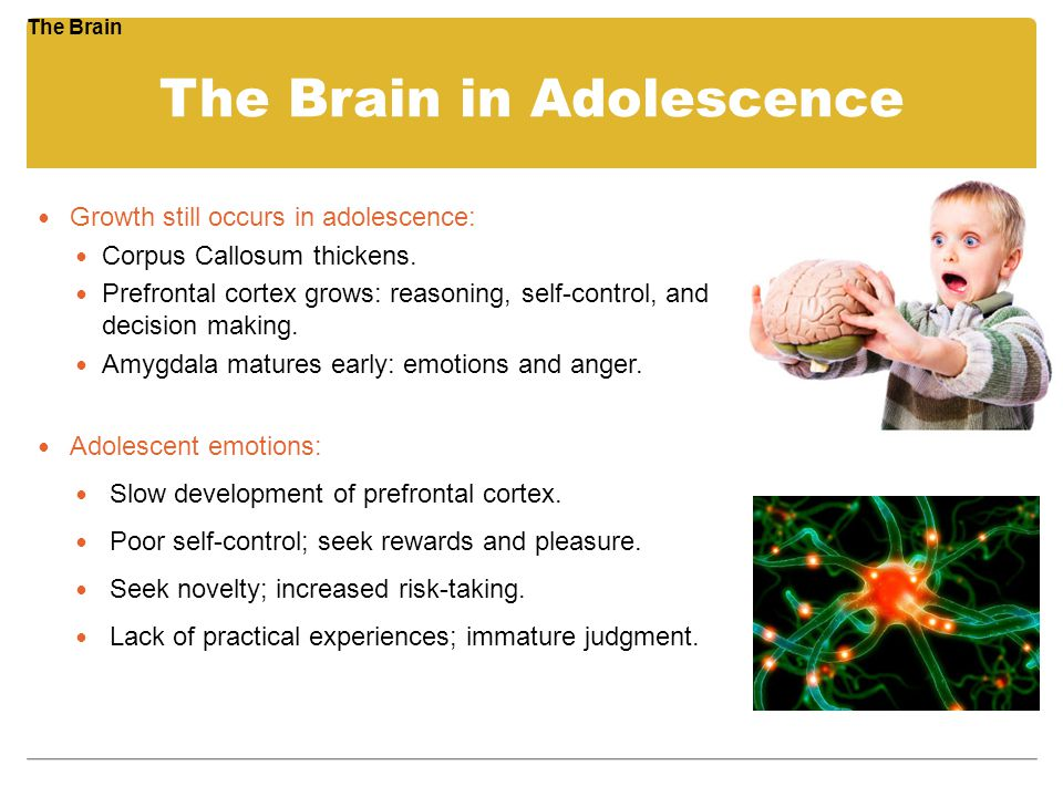 The Brain in Adolescence Growth still occurs in adolescence: Corpus Callosum thickens. Prefrontal cortex grows: reasoning, self-control, and decision