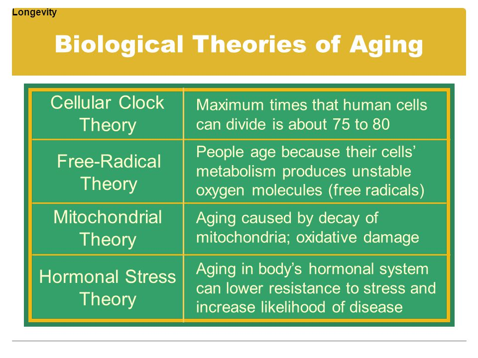 Biological Theories of Aging Cellular Clock Theory Free-Radical Theory Mitochondrial Theory Maximum times that human cells can divide is about 75 to 8
