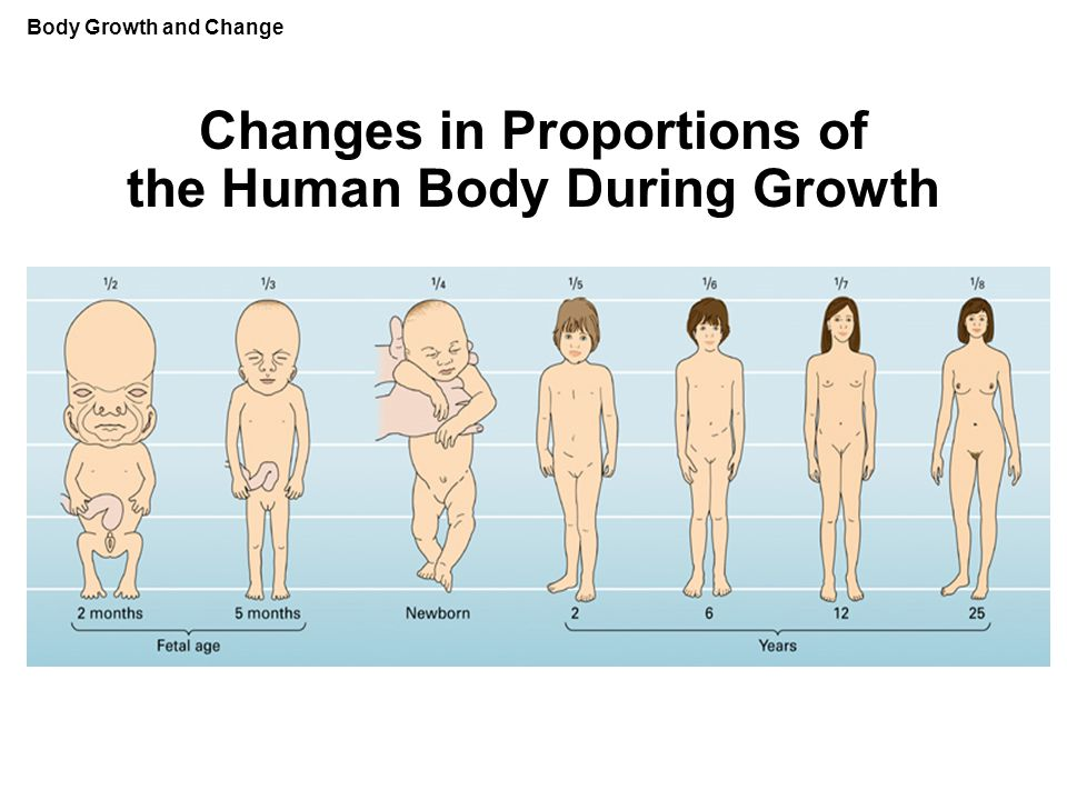 Changes in Proportions of the Human Body During Growth Body Growth and Change
