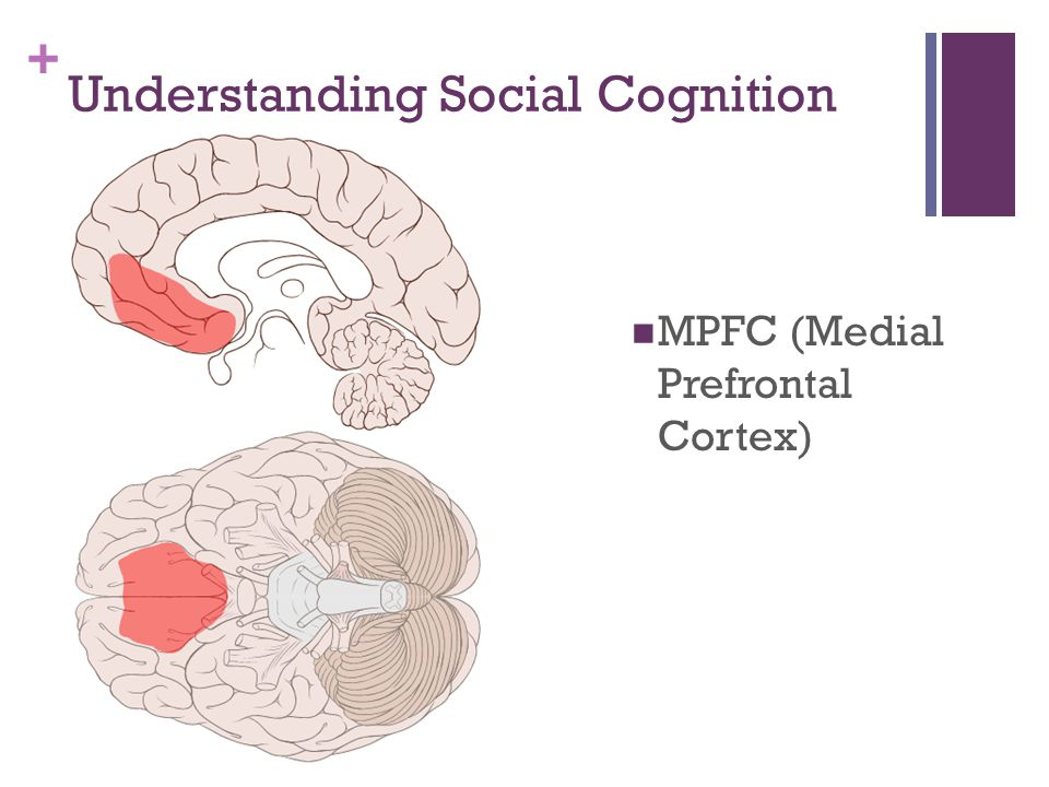 + Understanding Social Cognition MPFC (Medial Prefrontal Cortex)