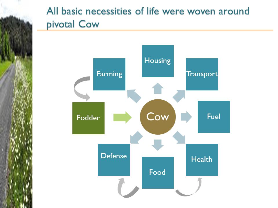 All basic necessities of life were woven around pivotal Cow Cow Housing Transport Fuel Health Food Defense Fodder Farming