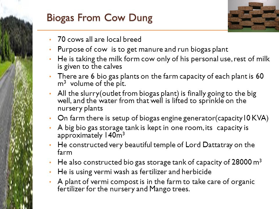 Biogas From Cow Dung 70 cows all are local breed Purpose of cow is to get manure and run biogas plant He is taking the milk form cow only of his personal use, rest of milk is given to the calves There are 6 bio gas plants on the farm capacity of each plant is 60 m 3 volume of the pit.